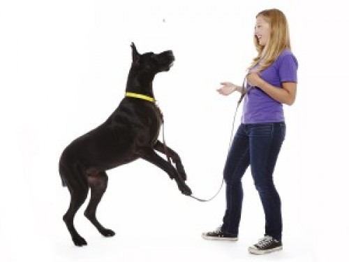 By Katie Virtue: MO' DOG, MO' PROBS – WHAT'S LIFE WITH A BIG DOG REALLY LIKE?