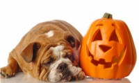 Is Halloween a Nightmare for Your Dog?