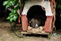 All Tied Up: Understanding Why Dogs Left Outside Become Aggressive