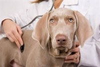 """What Every Dog Owner Should Know About Their """"Annual Vet Visit"""""""
