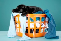 Confessions of a Dog Trainer: Airing all our Dirty Laundry