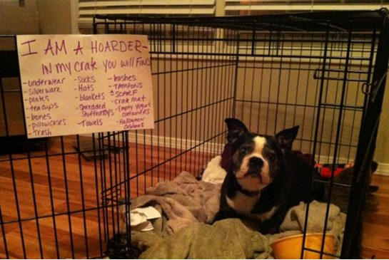 Dog shaming canines are cowering, says Canadian trainer