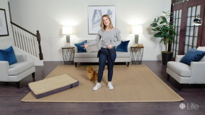 How to train your dog to go to their bed — a spot for them when you need some space