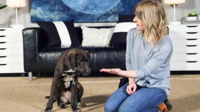 How to teach your dog: