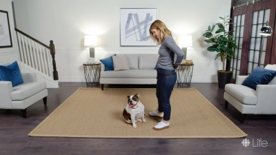 How to train your dog to 'stay' to keep them safe throughout their life