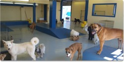 What Every Owner Should Know About Dog Daycare