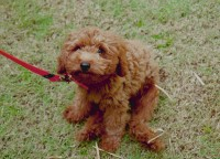 Are You Caught up in a Battle of Wills With Your Puppy On Walks?