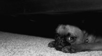 Can We Reinforce Fear In Our Dogs?