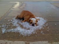 Hot Dogs: Recognizing and Treating Heat Stroke