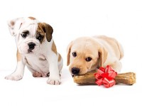 What is the best food to feed domesticated dogs?