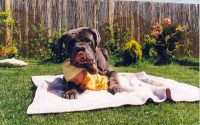 """Is Your Dog Really """"Protective"""" of Your Baby?"""