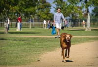 Dog Park Distaster: Why Do So Many of Us Never Go Back?