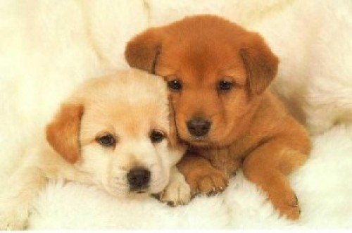 Is Getting a Puppy a Safer Bet Than Getting a Rescue?