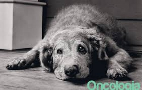 Guest Blog by Katie Virtue: How to Show Senior Dogs All the Love they Deserve