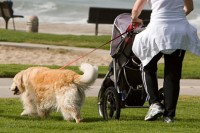 5 Tips for Walking Your Dog Beside a Stroller