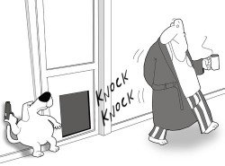 Why Is My Dog STILL Barking at the Front Door?