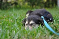 Staging a Protest: What to Do When Your Dog Refuses to Walk On-Leash